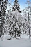Árbol forestal del invierno Foto de archivo