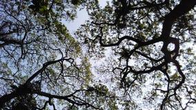 Árbol forestal en silueta del cielo imagenes de archivo