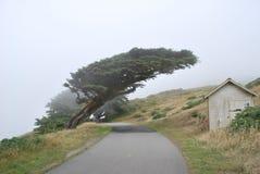Árbol formado por el tiempo Fotografía de archivo