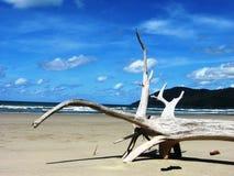 Árbol fosilizado en la playa de Kewarra fotografía de archivo libre de regalías
