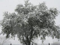 Árbol frío foto de archivo libre de regalías