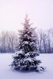 Árbol frío del invierno Fotografía de archivo libre de regalías