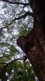 Árbol frecuentado Fotos de archivo libres de regalías
