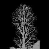 Árbol frecuentado Vencedor EPS 10 ilustración del vector