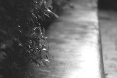 Árbol fresco de la rama soñadora borrosa del arbusto el pequeño se va con el fondo del banco que se sienta de piedra en el jardín Imagenes de archivo