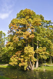 Árbol frondoso por el lago Foto de archivo libre de regalías