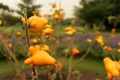 Árbol frutal de la entrerrosca Fotos de archivo