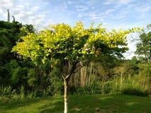 Árbol frutal en una granja hermosa, con las hojas y las flores verdes hermosas imagenes de archivo