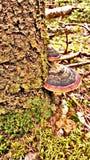 Árbol fungoso Fotos de archivo libres de regalías