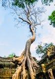 Árbol gigante en el tejado del tample fotografía de archivo libre de regalías