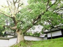 Árbol gigantesco Imágenes de archivo libres de regalías