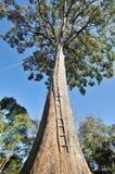Árbol grande Imagen de archivo libre de regalías