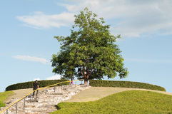 Árbol grande Imágenes de archivo libres de regalías