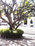 Árbol grande Imagenes de archivo