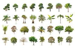Árbol grande aislado en el fondo blanco, la colección de árboles fotografía de archivo libre de regalías