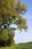 Árbol grande con la hierba Imágenes de archivo libres de regalías