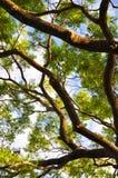 Árbol grande de debajo Imágenes de archivo libres de regalías