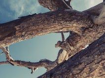 Árbol grande de debajo contra el cielo Fotos de archivo
