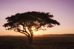 Árbol grande de la silueta en la salida del sol Imagen de archivo