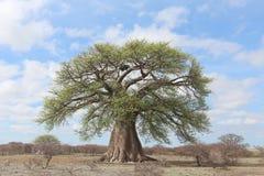 Árbol grande del baobab Imágenes de archivo libres de regalías