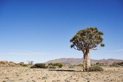 Árbol grande del estremecimiento Foto de archivo