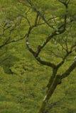 Árbol grande del otoño en el jardín fotos de archivo