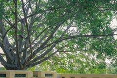 Árbol grande del ` s del templo Imagen de archivo libre de regalías