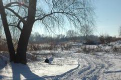 Árbol grande en el fondo del resto de la superficie nevada Imágenes de archivo libres de regalías