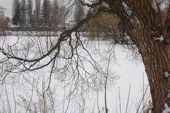 Árbol grande en el fondo del resto de la superficie nevada Fotos de archivo