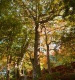 Árbol grande en el jardín japonés de Yoshikien, Nara, Japón Imagen de archivo
