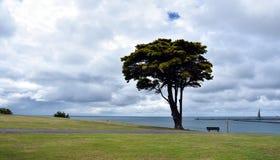 Árbol grande en el parque concedido de la tierra foto de archivo libre de regalías