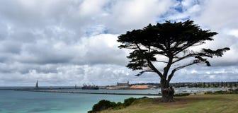 Árbol grande en el parque concedido de la tierra fotos de archivo