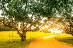 Árbol grande en jardín Imágenes de archivo libres de regalías