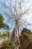 Árbol grande en la pared Fotografía de archivo libre de regalías