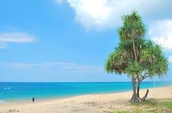 Árbol grande en la playa Imagen de archivo