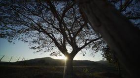 Árbol grande en la puesta del sol Fotografía de archivo libre de regalías