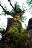 Árbol grande en las delanteras Fotos de archivo libres de regalías