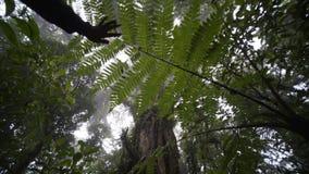 Árbol grande en selva tropical almacen de video