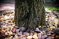Árbol grande entre piedra colorida con las hojas, el suelo y la planta secos Fotos de archivo libres de regalías