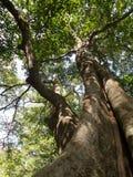 Árbol grande a lo largo de la corriente verde de la cascada Fotografía de archivo libre de regalías
