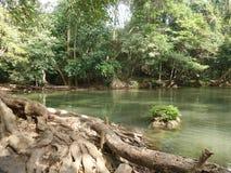 Árbol grande a lo largo de la corriente verde de la cascada Fotografía de archivo