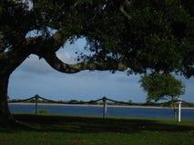 Árbol grande por el puerto Fotografía de archivo