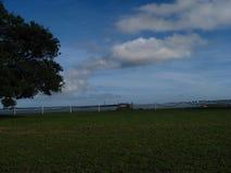 Árbol grande por el puerto Imagen de archivo
