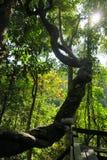 Árbol grande y divertido en la selva Imagenes de archivo