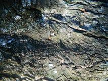 Árbol grueso, grueso del marrón de la corteza, gris y brillante de castaña, otoño Imagen de archivo libre de regalías