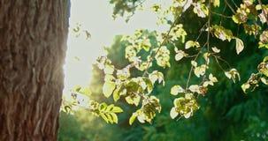 Árbol hecho excursionismo con la luz del centelleo almacen de video