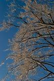 Árbol helado Foto de archivo libre de regalías