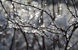 Árbol helado Fotografía de archivo libre de regalías