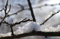 Árbol helado Fotografía de archivo