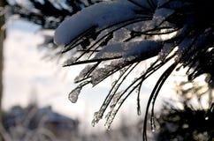 Árbol helado Fotos de archivo libres de regalías